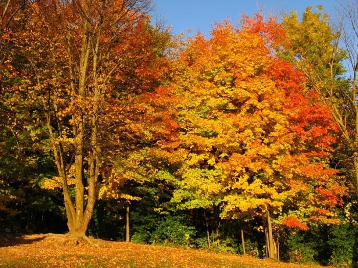 Autumn in a Small Ontario Town