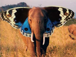 Elephant/Butterfly by saulinis