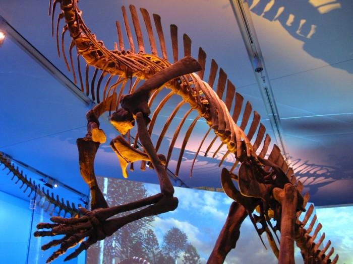 Dinosaur Ribs