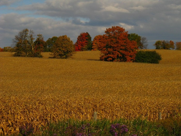 Farm Country, Ontario, Canada