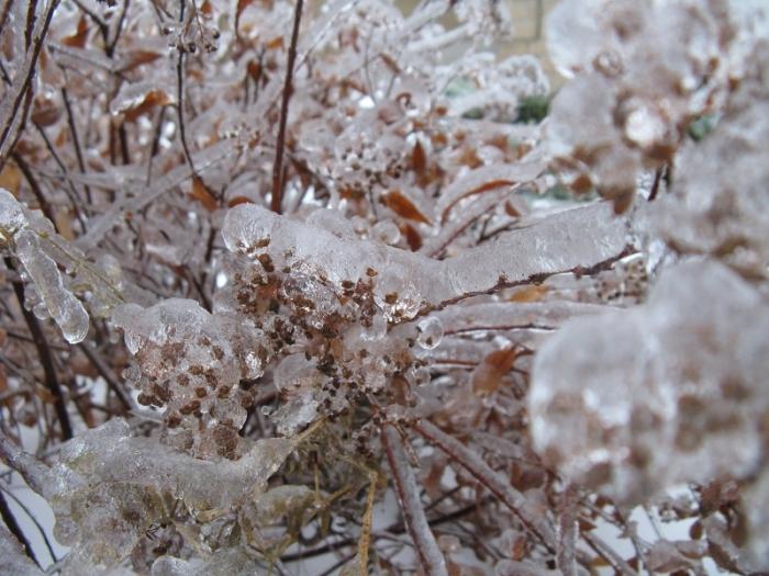 More plants  frozen solid