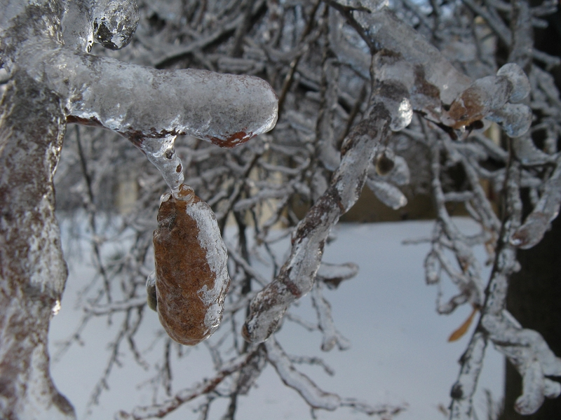 A leaf frozen in place