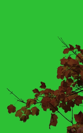Isolated leaves on green screen