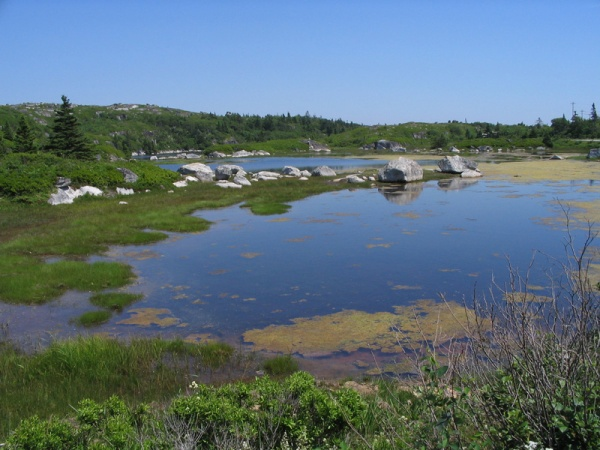 Marshes in Nova Scotia