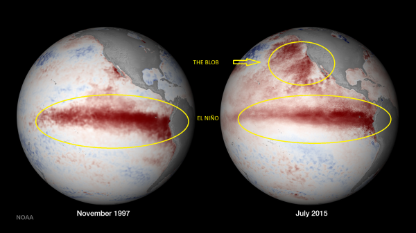 The Blob [Photo Credit: National Oceanic and Atmospheric Administration]